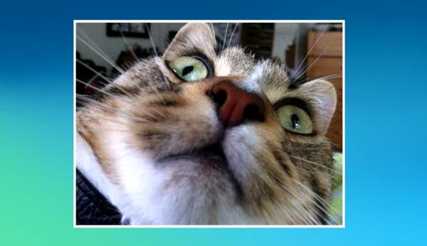 แอพเซลฟี่แมว Candid Catmera เทคโนโลยีใหม่สำหรับทาสแมว